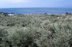Foto 2 Neubau Einfamilienhaus auf dem schönen Pilion/Griechenland