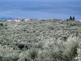 Foto 3 Neubau Einfamilienhaus auf dem sch�nen Pilion/Griechenland