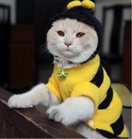 Foto 2 Neuer Pullover für Hunde und Katzen mit Knöpfen Kapuze Ungetragen Biene