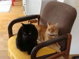 Neues Zuhause für Katzenpärchen