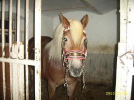 Foto 2 *~Neuwertiges Pferdekummet~*
