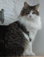 Foto 3 Neva Mädchen sucht liebevolle Katzeneltern