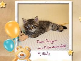 Foto 4 Neva Masquerade & Sibirische Katzen ''vom-Katharinenpalast.eu''