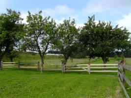 Foto 5 Niederösterreich / Waldviertel Renoviertes Bauernsacherl Nähe Zwettl