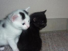 Niedliche Katzenbabies