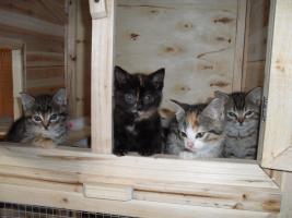 Niedliche Katzenbabys, Kätzchen, Kitten in liebevolle Hände abzugeben