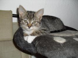 Foto 3 Niedliche Katzenbabys, Kätzchen, Kitten in liebevolle Hände abzugeben