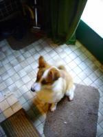 Foto 3 Notfall - Lucky sucht dringendst eine PS oder ES .....