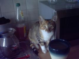 Notfall!  Niedliche Katzenkinder suchen ein zu Hause!
