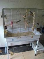 Nymphensittiche mit Käfig