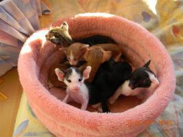 OKH Kitten suchen tolle Mitbewohner