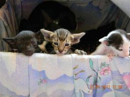 Foto 2 OKH Kitten suchen tolle Mitbewohner