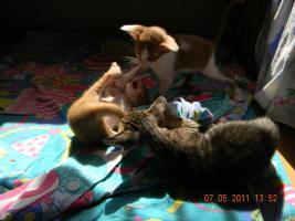 Foto 3 OKH Kitten suchen tolle Mitbewohner