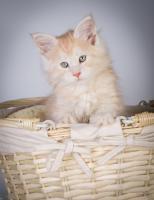 Foto 8 Oberwalls Kitten