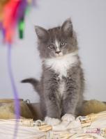 Foto 9 Oberwalls Kitten