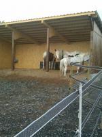 Offenstallplatz oder Platz für Beistell Pferd zu vergeben