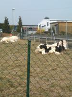 Foto 2 Offenstallplatz oder Platz für Beistell Pferd zu vergeben