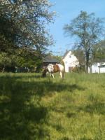 Foto 3 Offenstallplatz oder Platz für Beistell Pferd zu vergeben