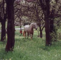 Offenstallplatz fü Freizeitpferd