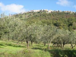 Olivenhain mit 220 Bäumen ital. Adria bei Pescara 13010 qm Grund