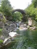 Waldsee mit Brücke