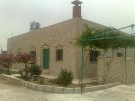 Foto 2 Olivenplantage in Jordanien ( Madaba Umm-Rasas )