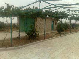 Foto 3 Olivenplantage in Jordanien ( Madaba Umm-Rasas )
