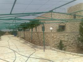 Foto 5 Olivenplantage in Jordanien ( Madaba Umm-Rasas )