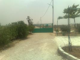 Foto 7 Olivenplantage in Jordanien ( Madaba Umm-Rasas )