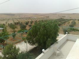 Foto 8 Olivenplantage in Jordanien ( Madaba Umm-Rasas )