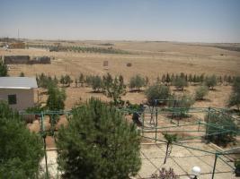 Foto 9 Olivenplantage in Jordanien ( Madaba Umm-Rasas )