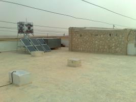 Foto 18 Olivenplantage in Jordanien ( Madaba Umm-Rasas )