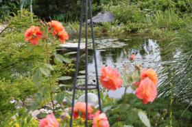 Online-Gartenratgeber Gratis