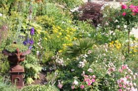 Foto 2 Online-Gartenratgeber Gratis