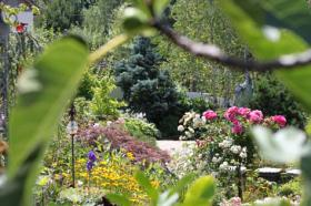 Foto 3 Online-Gartenratgeber Gratis