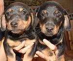 Foto 3 Online Hundetraining