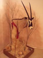 Oryx Kopf- u. Schulterpräparation auf Podest