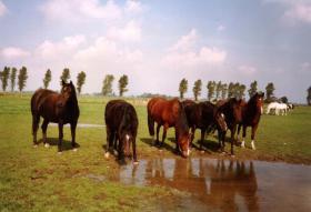Foto 4 Osterferien / Sommerferien / Urlaub / Kinderferien / Ostern / Reiten / Ponys / Pferde