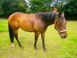 Foto 3 Ouarter Horse