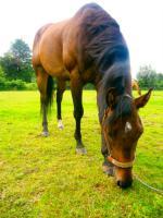 Foto 4 Ouarter Horse