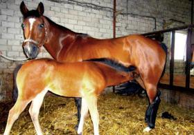 Foto 5 Ouarter Horse