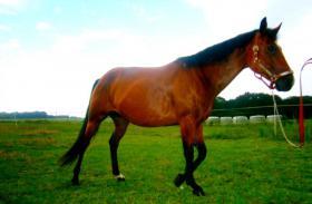 Foto 6 Ouarter Horse