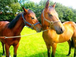 Foto 8 Ouarter Horse