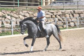 PRE - Pura Raza Espanola - direkt vom Züchter - alle Preisklassen