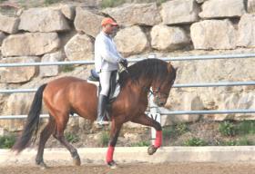 Foto 4 PRE - Pura Raza Espanola - direkt vom Züchter - alle Preisklassen