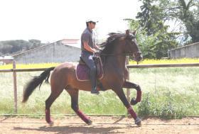 Foto 5 PRE - Pura Raza Espanola - direkt vom Züchter - alle Preisklassen