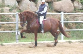 Foto 8 PRE - Pura Raza Espanola - direkt vom Züchter - alle Preisklassen