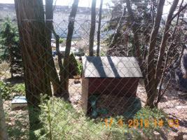 Foto 3 Pacht Garten abzugeben