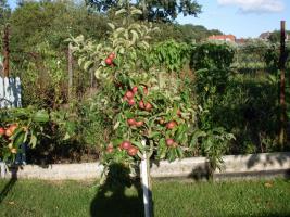 Foto 2 Pachtgarten mit massiver Laube
