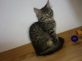 Foto 3 Pandorra, 10 Wochen sucht ein neues freundliches zu Hause